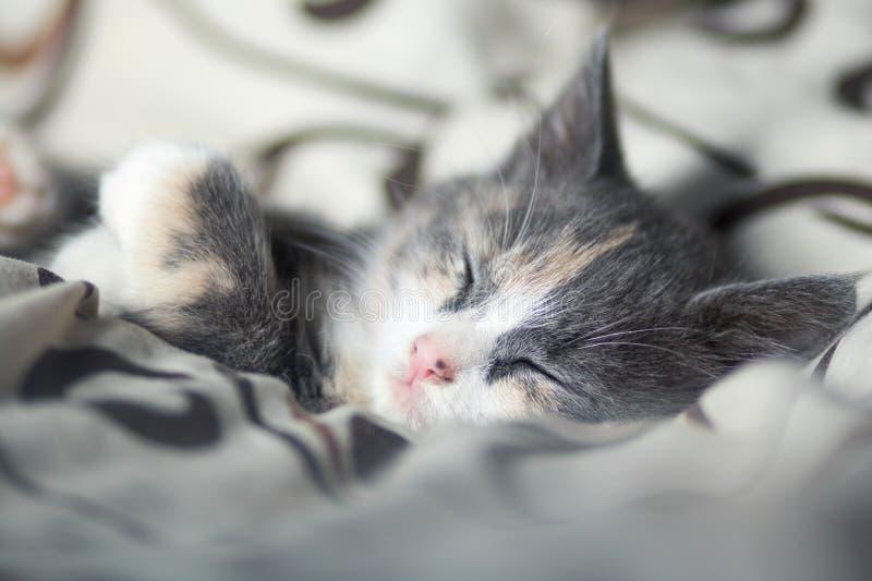 Portret van een snuit van een kleine grijze katjesslaap op het bed stock foto's