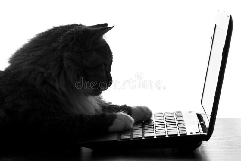 Portret van een speelse kat die op het toetsenbord van netbook liggen stock foto