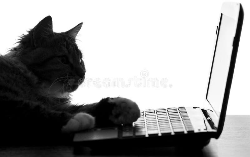Portret van een speelse kat die op het toetsenbord van netbook liggen stock fotografie