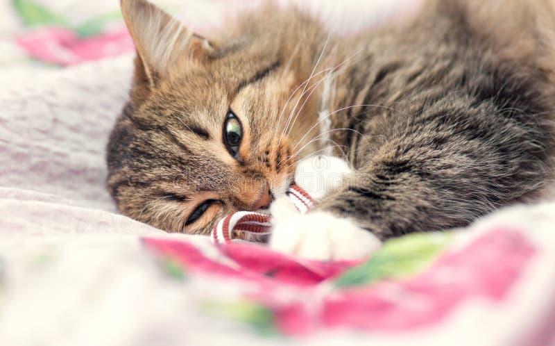 Portret van een speelse kat op het bed royalty-vrije stock afbeeldingen