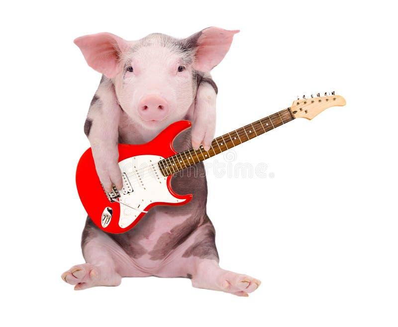 Portret van een varken dat de gitaar speelt stock afbeeldingen
