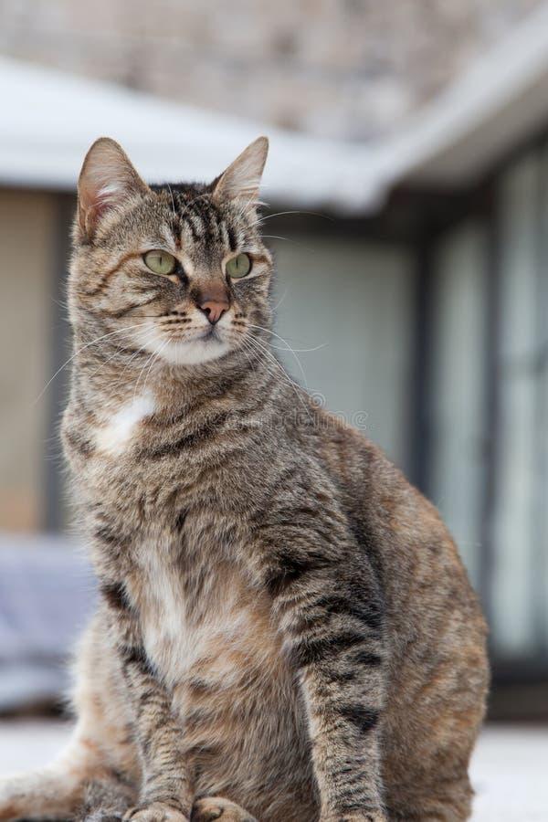 Portret van een vette kat die bij oude stad liggen dubrovnik stock fotografie