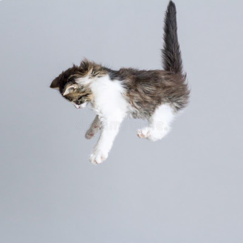 Portret van een vliegend katje bovenop een grijze studioachtergrond, creatieve foto stock foto