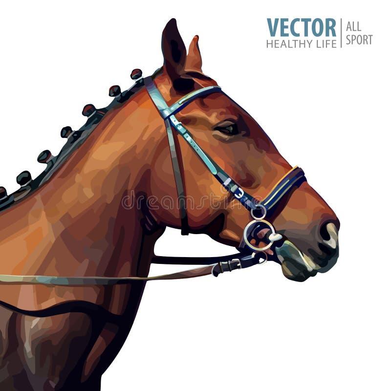 Portret van een volbloed- kastanjehengst Paard` s hoofd kampioen Sport Geïsoleerd op een witte achtergrond Vector stock illustratie