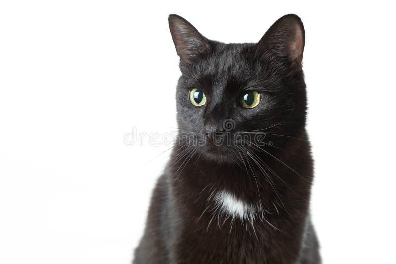 Portret van een volwassen zwarte kat op een witte achtergrond De kat zit stil eruit en ziet opzij royalty-vrije stock fotografie