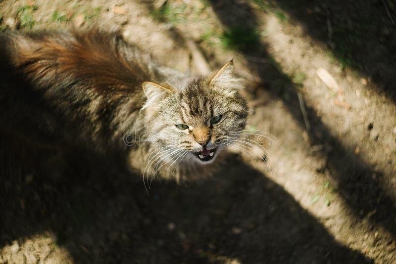 Portret van een weinig binnenlandse kat Favoriet huisdier royalty-vrije stock fotografie