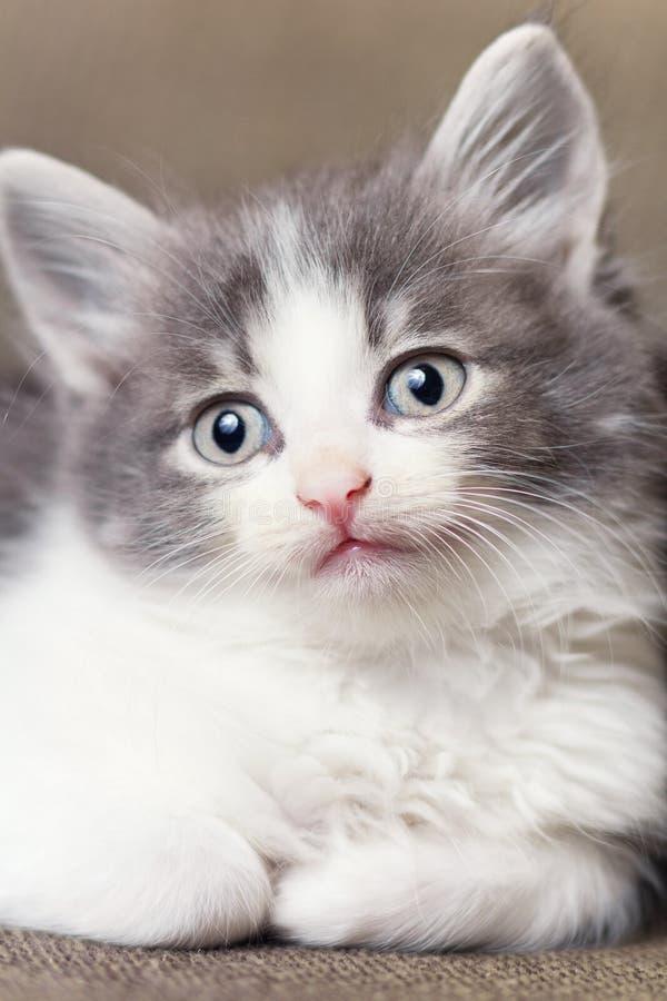 Portret van een weinig speels katje royalty-vrije stock afbeeldingen