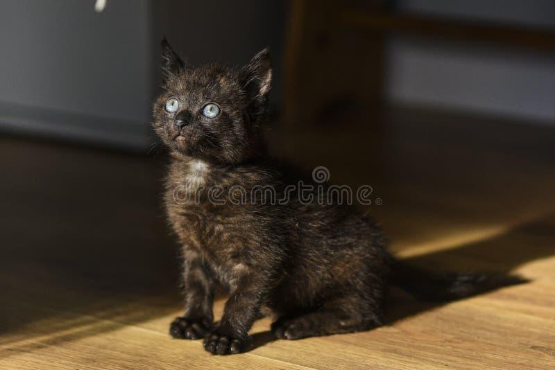 Portret van een weinig zwart katje met blauwe ogen royalty-vrije stock fotografie