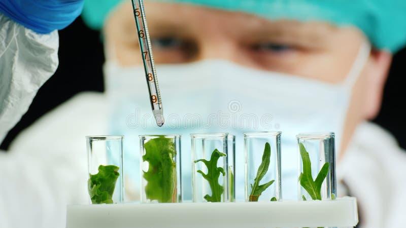 Portret van een wetenschapper die werkt met plantenmonsters in het lab stock afbeelding