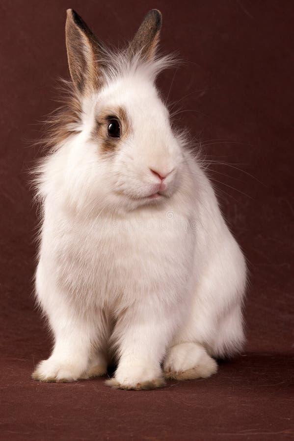Portret van een wit konijn royalty-vrije stock afbeelding