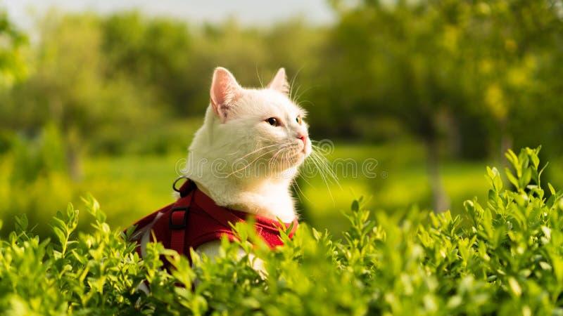 Portret van een witte kat in aard royalty-vrije stock afbeeldingen
