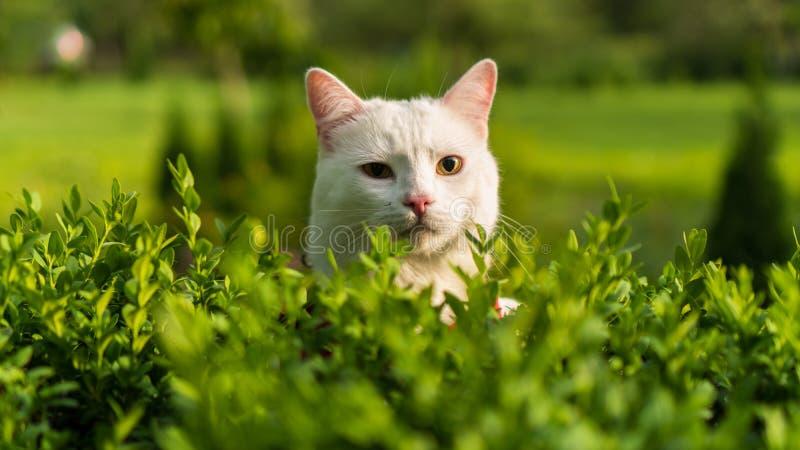 Portret van een witte kat in aard royalty-vrije stock fotografie