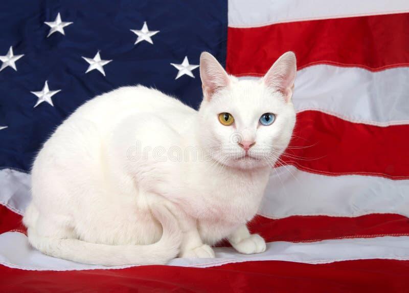 Portret van een witte kat met heterochromia die op een Amerikaanse Vlag wordt gebogen royalty-vrije stock afbeeldingen