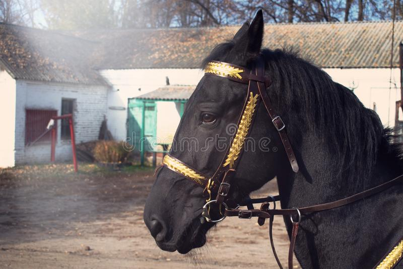 Portret van een zwart paard in zonstralen royalty-vrije stock afbeelding