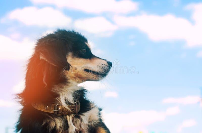 Portret van een zwarte hond op een blauwe hemelachtergrond binnenlands huisdier, dier Plaats voor tekst Copyspace stock afbeeldingen
