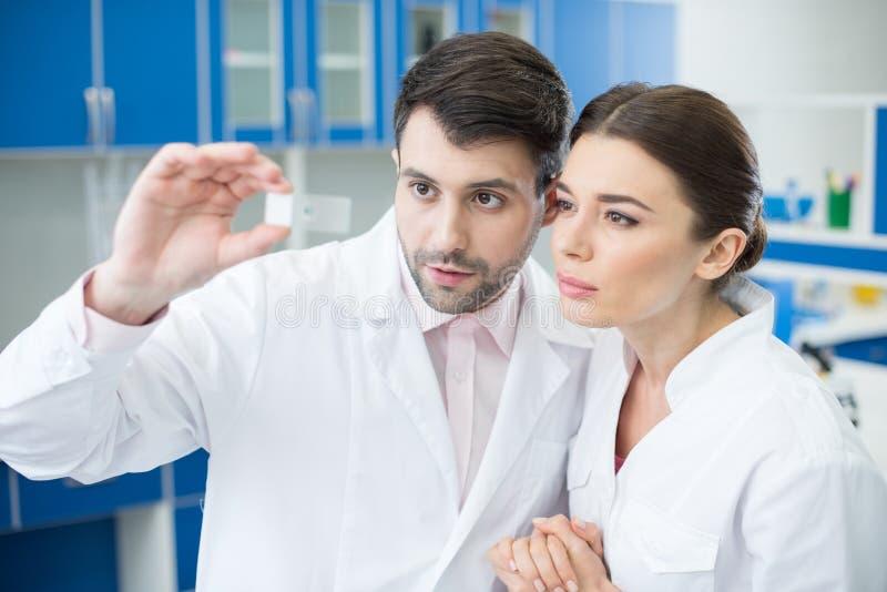 Portret van geconcentreerde wetenschappers die microscoopdia bekijken royalty-vrije stock foto