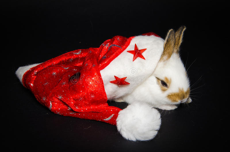 Portret van grappig konijntje met Kerstmishoed royalty-vrije stock foto