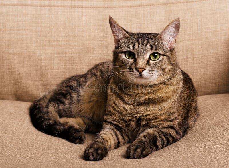 Portret van groen-eyed kat royalty-vrije stock fotografie