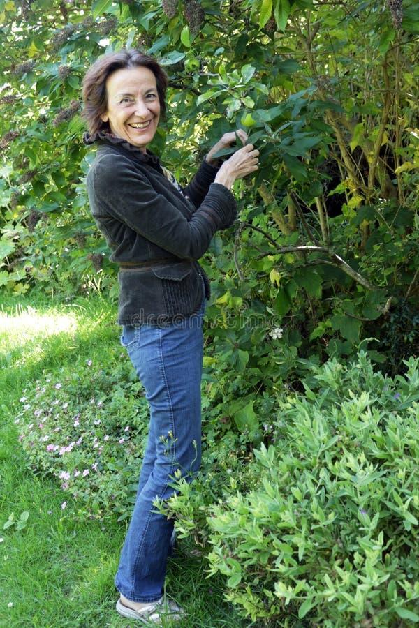 Portret van het hogere vrouw tuinieren stock foto