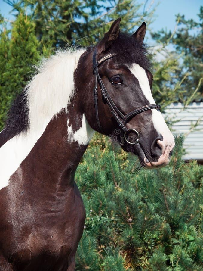 Portret van het mooie paard van het verfontwerp stock foto
