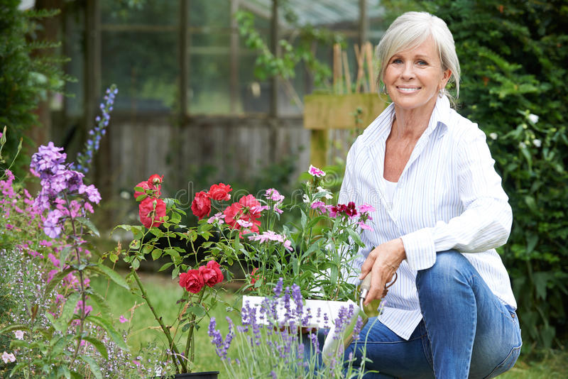 Portret van het Rijpe Vrouw Tuinieren royalty-vrije stock afbeelding