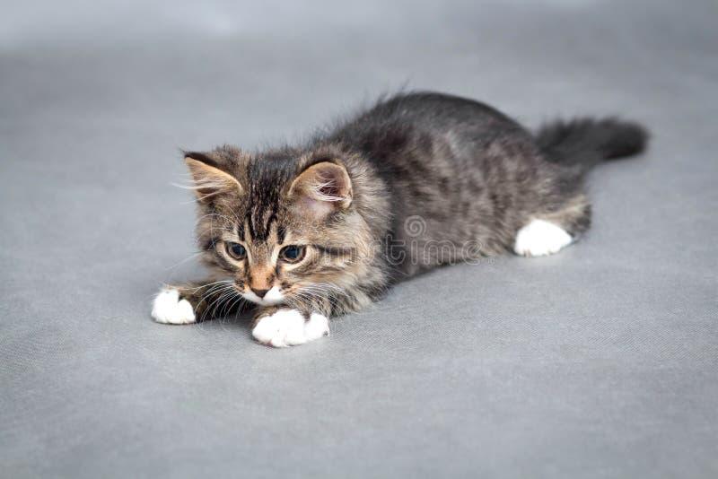 Portret van het speelse katje royalty-vrije stock foto