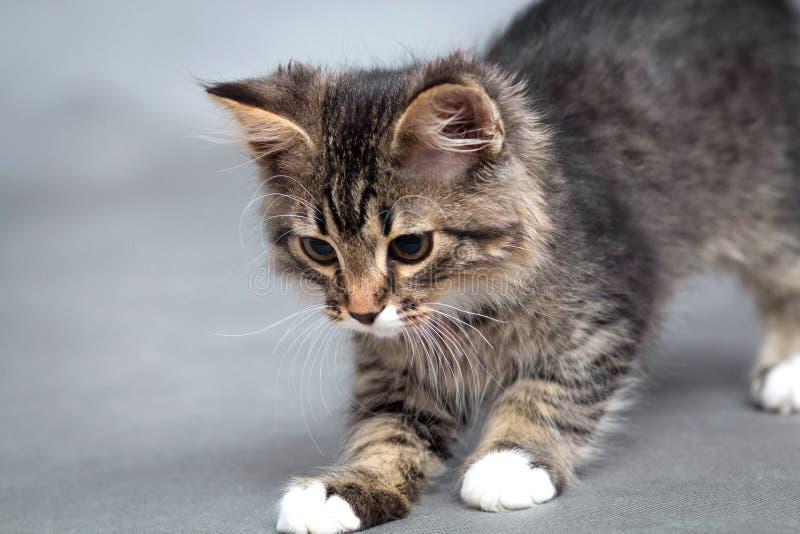 Portret van het speelse katje royalty-vrije stock fotografie