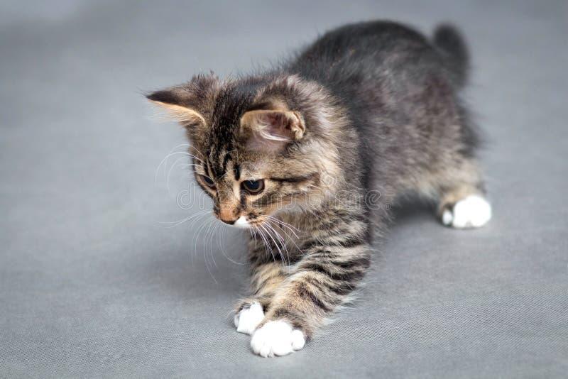 Portret van het speelse katje stock afbeelding
