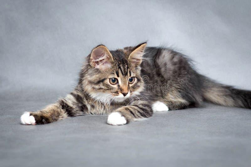 Portret van het speelse katje stock foto