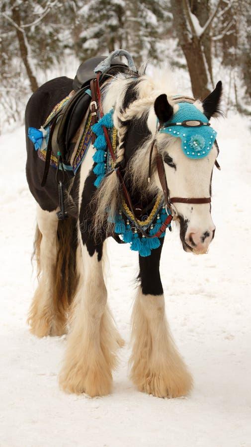 Portret van het verfraaide uitgeruste witte paard in teugel De winter stock afbeelding