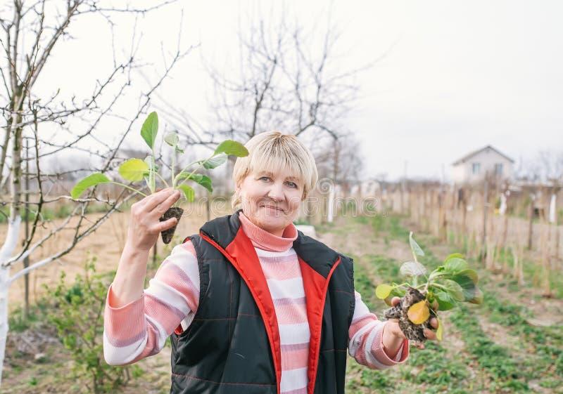 Portret van hogere vrouw die koolzaailing planten stock afbeelding