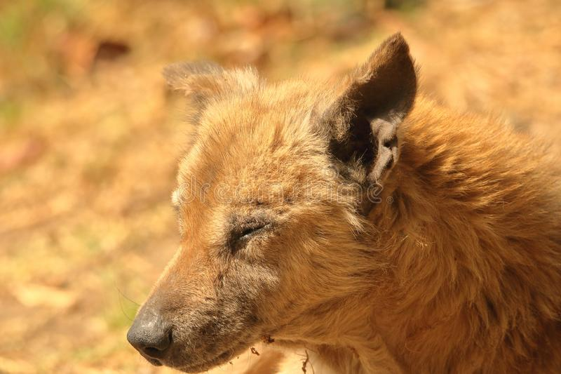 Portret van hond royalty-vrije stock afbeeldingen