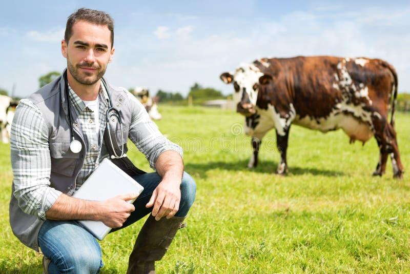 Portret van Jonge aantrekkelijke veterinair in een weiland met koeien stock foto