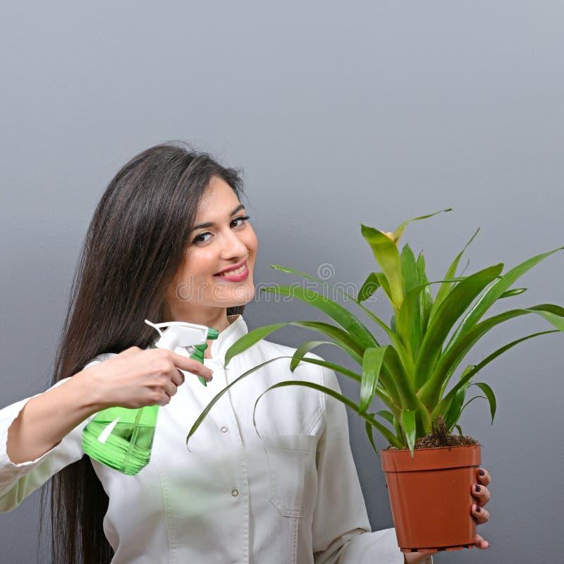 Portret van jonge vrouwenplantkundige het water geven installatie tegen grijze achtergrond stock foto