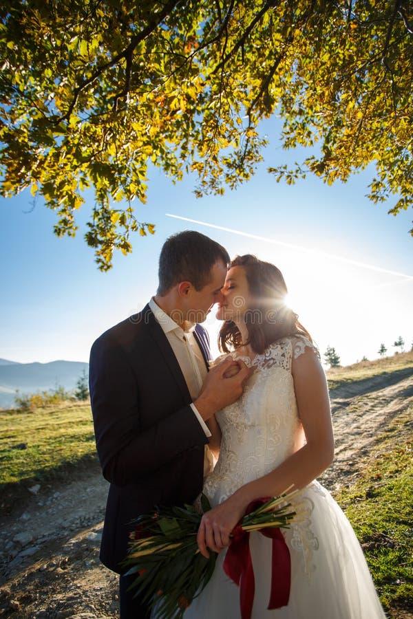 Portret van jonggehuwden dichtbij een boom, tegen de achtergrond van de bergen Het houden van paargangen in de bergen royalty-vrije stock afbeelding