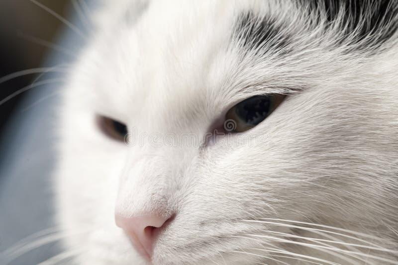 Portret van kat royalty-vrije stock fotografie