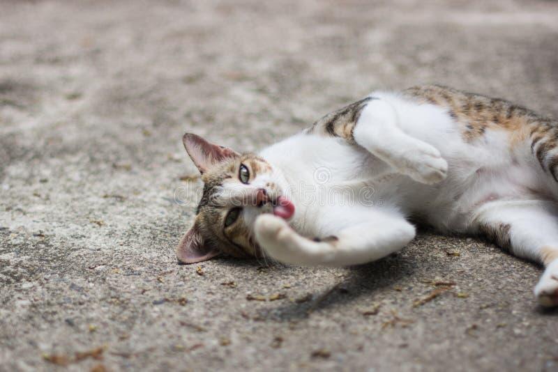 Portret van kat stock afbeelding