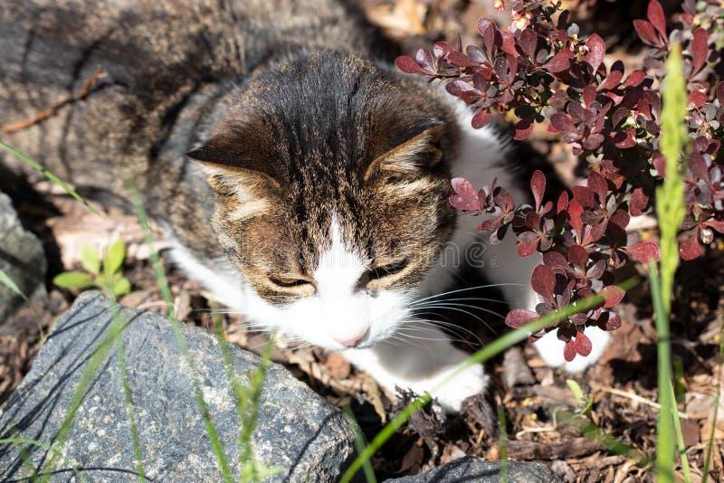 Portret van kat Een leuke kat genoemd Miri op een mooie de zomerdag in de tuin tussen de installaties is klaar voor de jacht sele stock afbeelding