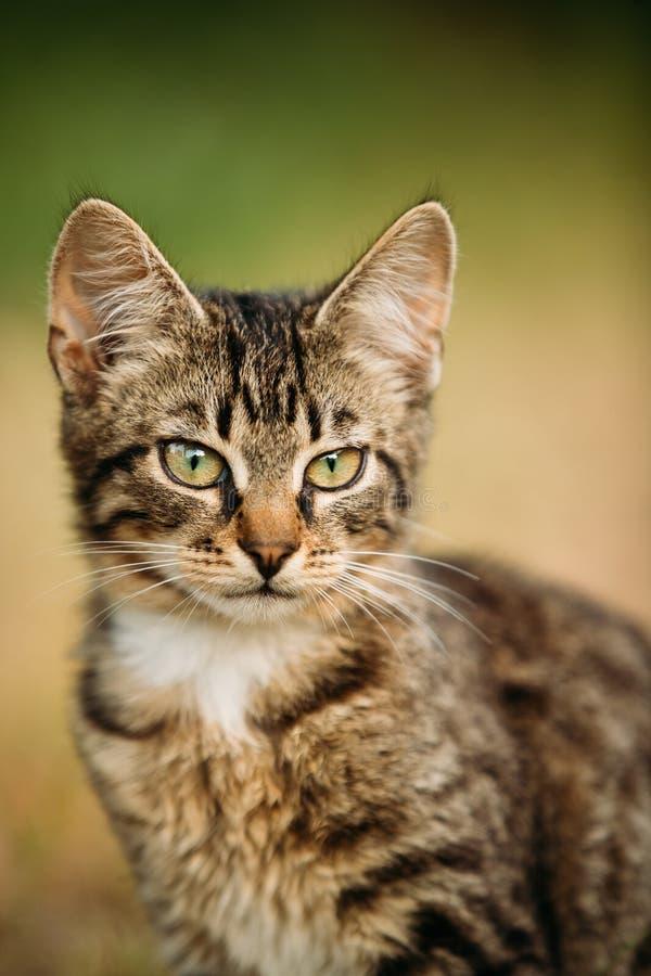 Portret van Klein Leuk Tabby Gray Cat Kitten At Blurred Green-Gras royalty-vrije stock foto