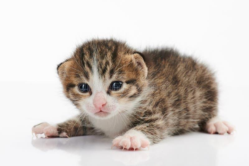 Portret van kleine babykat royalty-vrije stock afbeelding