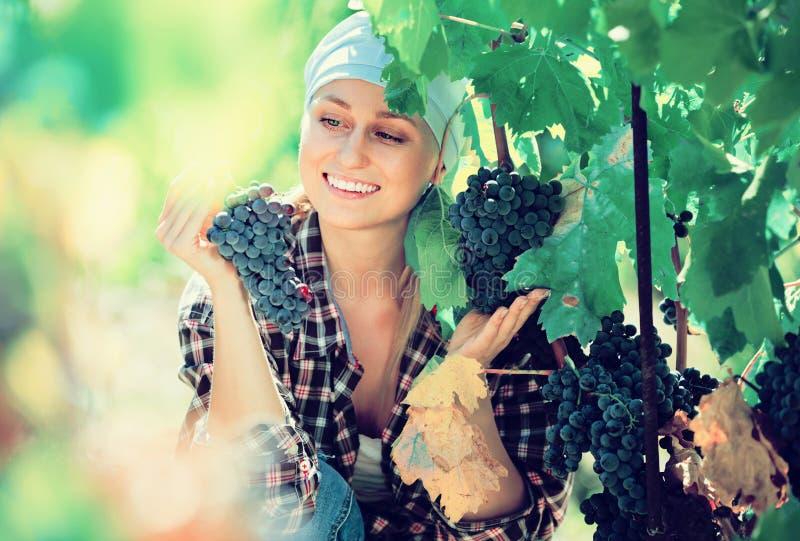 Portret van lachende vrouwelijke werknemer bij druivenlandbouwbedrijf royalty-vrije stock foto