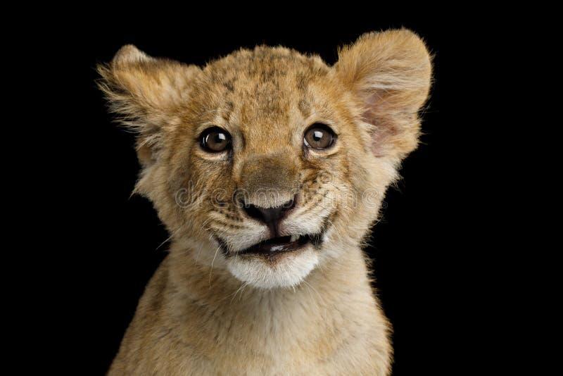 Portret van leeuwwelp royalty-vrije stock fotografie
