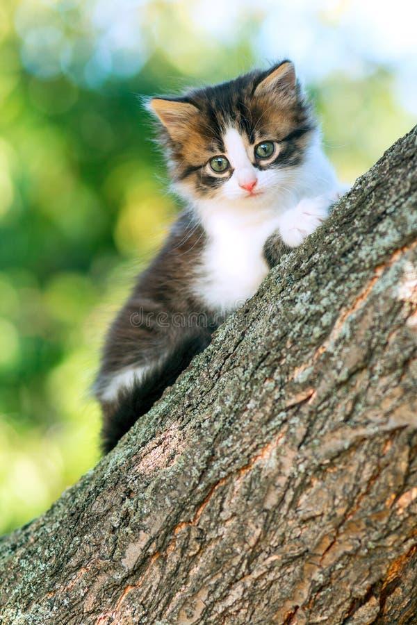 Portret van leuk weinig pluizige pot die op een boomtak beklimmen in de aard royalty-vrije stock foto