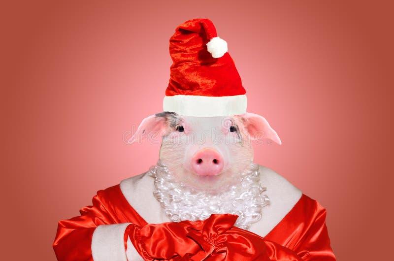 Portret van leuke piggy in Santa Claus-kostuum stock foto