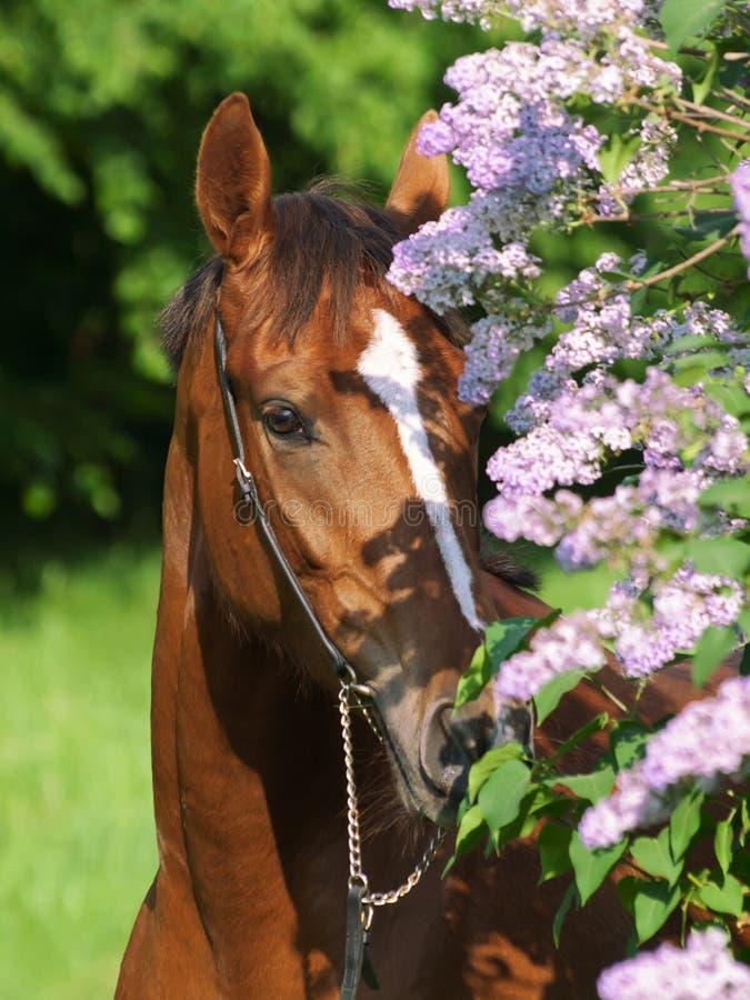 Portret van mooi rood paard dichtbij bloem stock fotografie