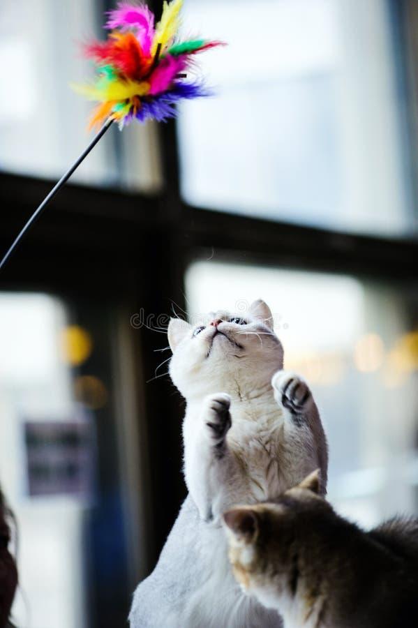 Portret van mooie kat stock afbeelding