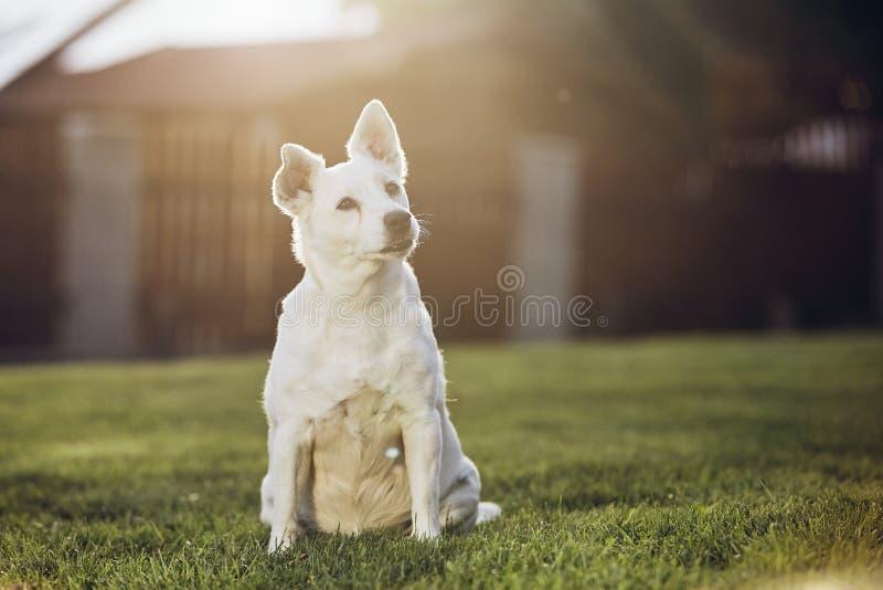 Portret van oude hond stock fotografie