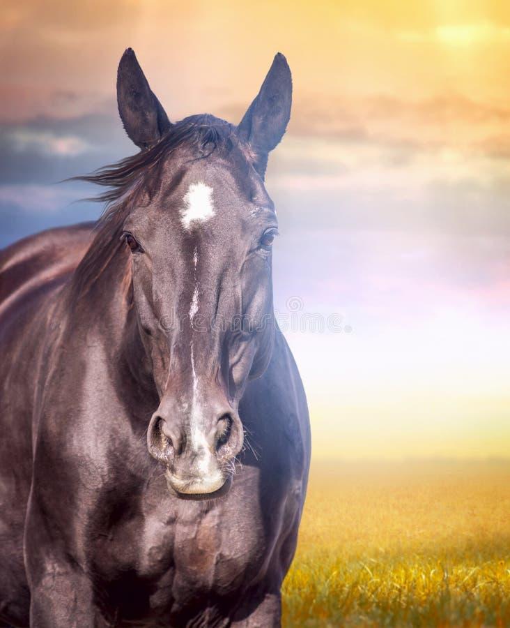 Portret van paard in de herfstlandschap bij zonsondergang royalty-vrije stock foto's
