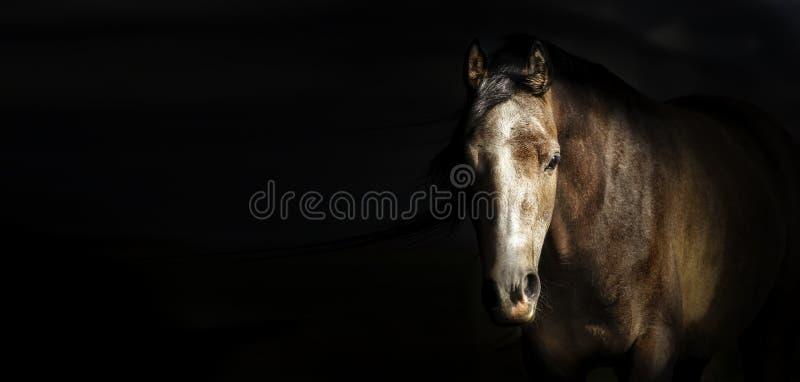Portret van paardhoofd bij donkere achtergrond, banner royalty-vrije stock afbeeldingen
