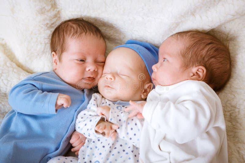 Portret van pasgeboren drietallen - jongens royalty-vrije stock afbeelding